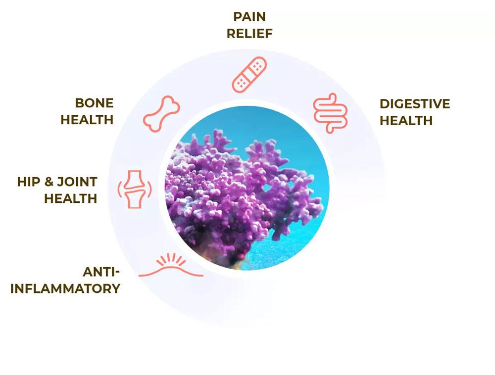 Aquamin Natural Ingredient