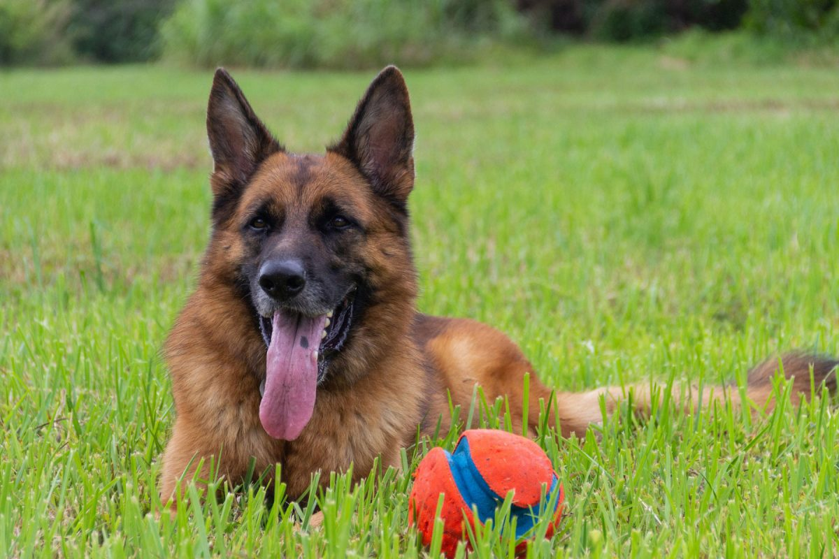 Dogs with Hip Dysplasia